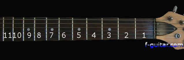 Electric Guitar Parts Diagram  String  Finger Numbering